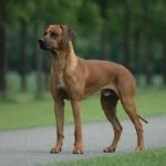Dog Nature's Early Warning System alarm