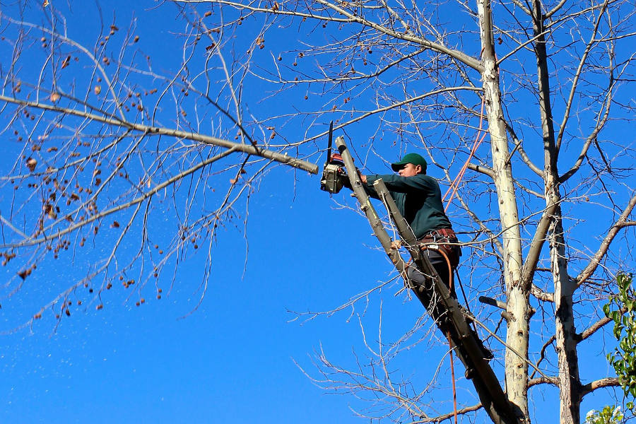 tree limb chainsaw