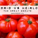 Hybrid Seeds vs Heirloom Seeds – The great debate