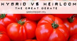hybrid vs heirloom seeds
