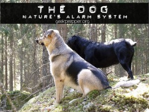 the dog natures alarm
