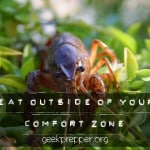 Eat Outside Your Comfort Zone