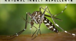 natural insect Repellents