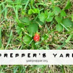 Make your yard a Prepper's Yard
