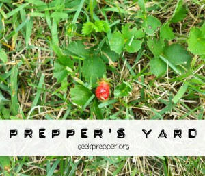preppers yard