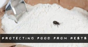 protecting food from pests