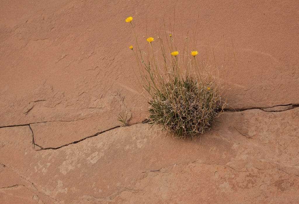 how to survive on a desert Would you survive on a desert island comments would you survive on a desert island that is the question take this absolutely useless quiz to find out what type of.