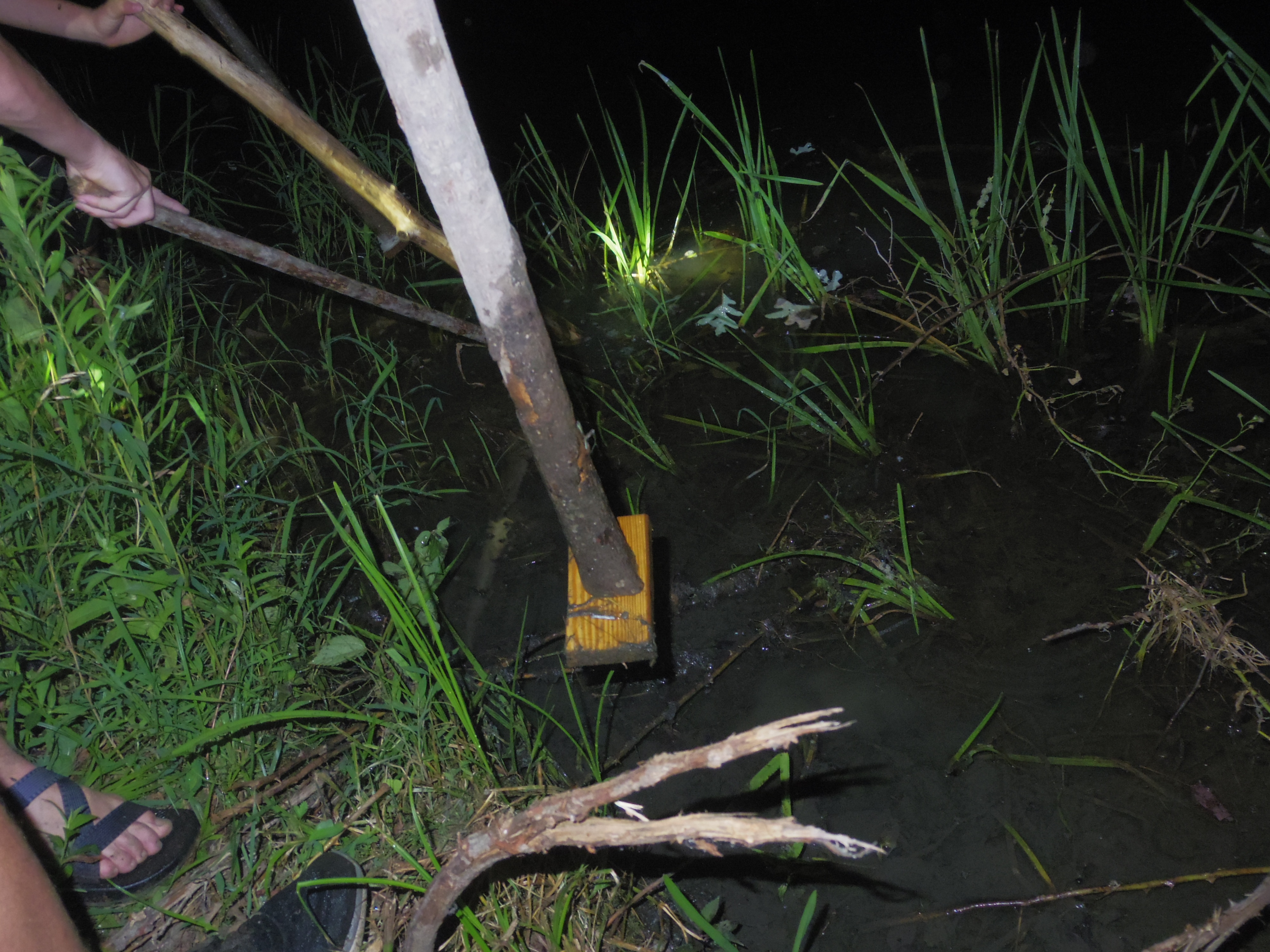 Frog gigging with homemade frog gigs